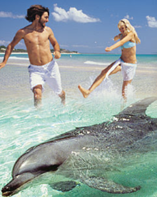 dolphin and couple